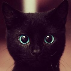I'm not a cat person BUT those eyes.. Defiantly a cutie