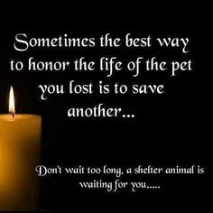Honor your beloved pet by adopting a shelter animal.