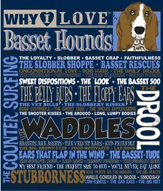 Why I Love Basset Hounds