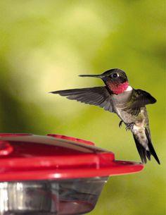 Hummingbirds :)