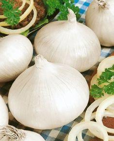Utah White Sweet Spanish Onion Seeds - Allium Cepa - 1 Grams - Approx 285 Gardening Seeds - Vegetable Garden Seed $2.39