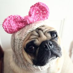 http://www.etsy.com/listing/91729034/dog-hat-betty-bow-hat..  @Erica Johnson