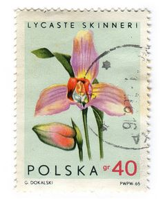 Poland c. 1965 part of the Orchids series Postage : Lycaste