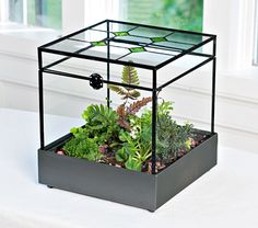 Stained Glass Terrarium Kit - White Flower Farm
