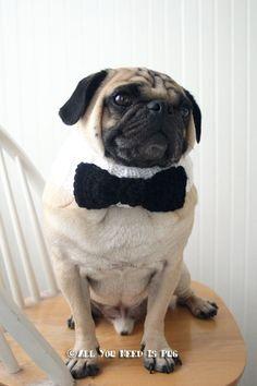 Black Tie Affair Dog Collar - Wedding Dog Collar