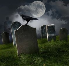 Halloween Photography Background Photo Backdrop by bradowen