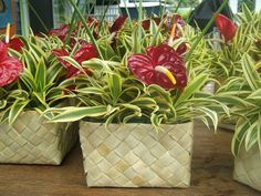 Luau Centerpiece. You will need a basket (of your choice. We used these small lauhala squares that are really boxes and are available at craft stores in Hawaii. You also need a plastic container of the same shape and preferably one that doesn't stick out over the top of your basket.kulk through your neighbors' yards and your own yard and cut and pick colorful greenery for filler. We used Star of India for its green and white striped leaves. We choose small red   anthuriums  for color