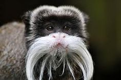 I want to do #Movember like this little guy #cool