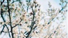 에피톤 프로젝트_봄날, 벚꽃 그리고 너, (Epitone project - Spring, Cherry Blossom and you) via YouTube.