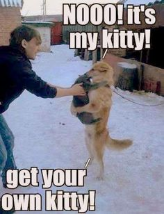 Get your own kitty!!!!