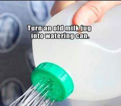 Old milk jug as watering can