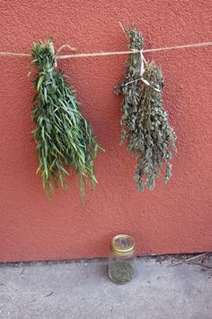 Preserving Herbs for Best Flavor - Ask Our Experts Blog