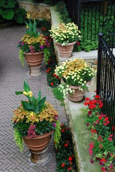 Detroit Garden Works wonderful site for container ideas. Love the containers on a ledge.