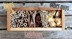 beneficial insects, insect hotel diy, bug hotel diy, bugs, insecten hotel, diy bug hotel, insectenhotel, benefici insect, garden