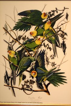 tattoo idea, palmetto state, carolina parakeet, bird tattoo, bird artist