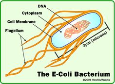 E. Coli...Research for school makes me not want to cook or eat.