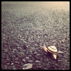 ....snail.