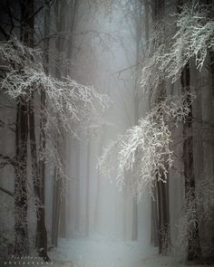 Mystical Snow Forest, Hungary: >>> 16 Degrees in Provo Utah and its COLD outside.. Thankful for my job and staying at home... Forests, Wood, Snow, Winter Wonderland, Frost, Trees, Beauti, Beauty, Winter Scenes