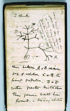 Creo que Charles Darwin.  Árbol de la vida / Una reproducción del primer esbozo conocido de un árbol evolutivo que describe las relaciones entre los grupos de organismos © Síndicos de la Universidad de Cambridge a través de la Biblioteca cromaticidades