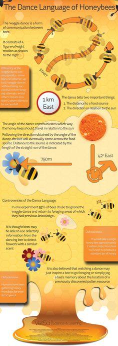 the dance language of honeybees :)