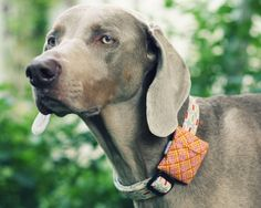 Como hacer bolsitas para perros