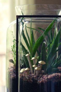 witandwhistle_DIY_terrarium_mushrooms
