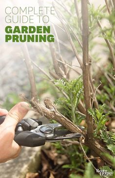 Complete guide to garden pruningw