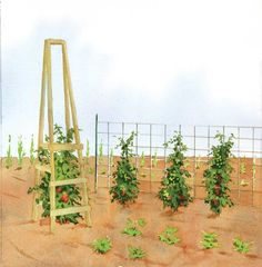 The Best Homemade Tomato Cages  Forget flimsy, store-bought products. Build your own sturdy, low-cost tomato cages with these four terrific designs!