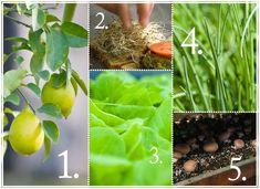 Five Edibles You Can Grow Indoors | Allen's Blog - P. Allen Smith Garden Home