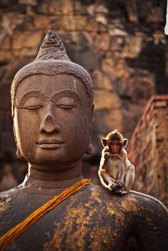 anim kingdom, buddhism, buddha monkey, monkeys, zen, beauti, medit, thing, photographi