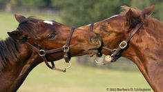 Foals Taco (Rachel Alexandra) and Chili - real name Union Jackson (Hot Dixie Chick) both by Curlin