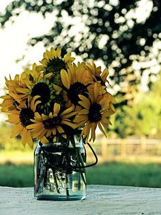sunflowers and the summer