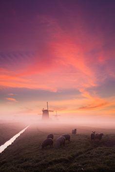 3 windmills / 7 sheep, Schermerhorn, Noord, Holland, The Netherlands.