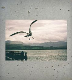 In Flight Photo Print