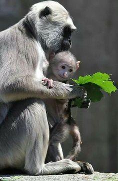 Awww, cute little monkey things!!!!