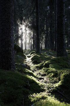 wood, tree, the darkness, dream, path, forest, road, light, walk