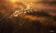 First Light ! by kiran kumar on 500px