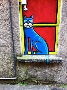 Cat on wall in Ireland, blue cat