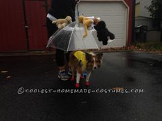 Raining Cats and Dogs Costume for a Dog... Coolest Halloween Costume Contest