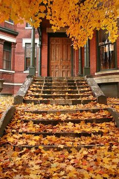 front steps, stair, fall leaves, boston, season, new england, autumn leaves, color, front doors