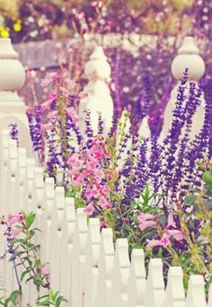 flowers growing by a white picket fence