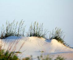 Dauphin Island sand dune