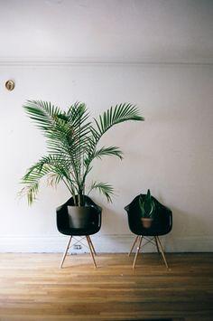 dominick volini // houseplants