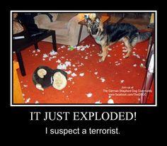 Via The German Shepherd Dog Community (Facebook)