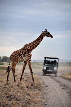 Amboseli National Park, Kenya. nation park, giraff, national parks, amboseli national park