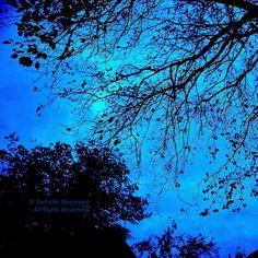 Silhouettes © Stefan