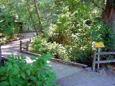 Carkeek Park Trails - Seattle, WA