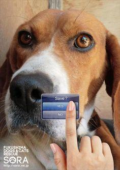Animal Rescue Advertising. SORA: Save Fukushima animals, 3