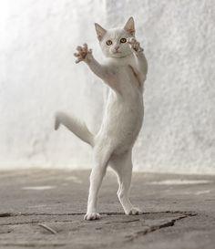 .I like your attitude Puss. Now en garde !