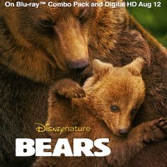 Disneynature's Bears comes to Blu-ray Combo Pack and Digital HD August 12! Pre-order your copy and be inspired by the real-life family story: http://di.sn/qbL